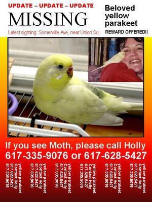 Lost_parakeet_moth_flyer_hgoodrich
